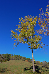 08 October 2013:   Scenic shot of nature in Yellowwood State Forest.<br /> <br /> Yellowwood State Forest was created on leased federal land in 1940.  It was later (1956) deeded to the state of Indiana.  More than 2000 vacant and eroded acres were planted with pine, black locust, black walnut, and red and white oak.  Yellowwood Lake is 133 acres and about 30 feet deep. This image was produced in part utilizing High Dynamic Range (HDR) processes. It should not be used editorially without being listed as an illustration or with a disclaimer. It may or may not be an accurate representation of the scene as originally photographed and the finished image is the creation of the photographer.