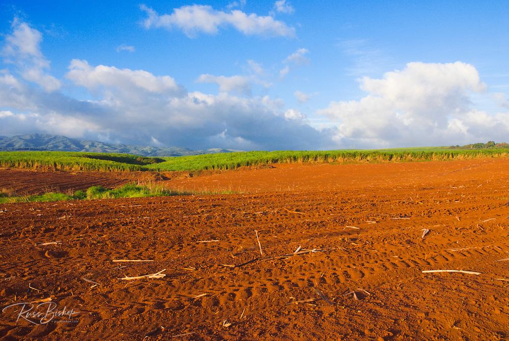 Sugar cane fields and red earth at the Robinson Plantation, Island of Kauai, Hawaii