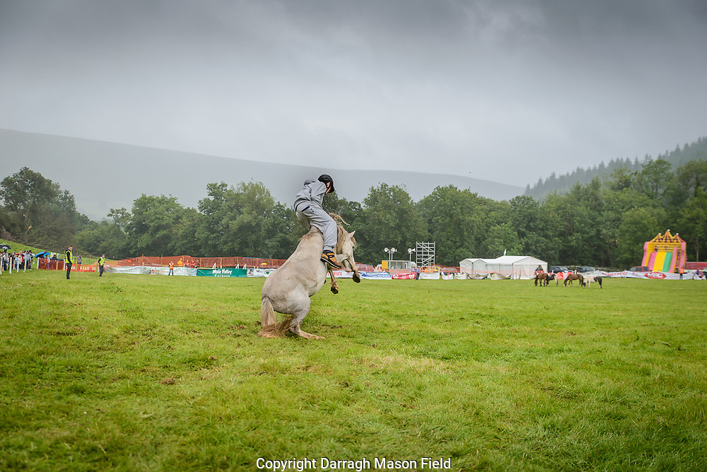 Rider and pony rear up against the grey sky of the Welsh summer