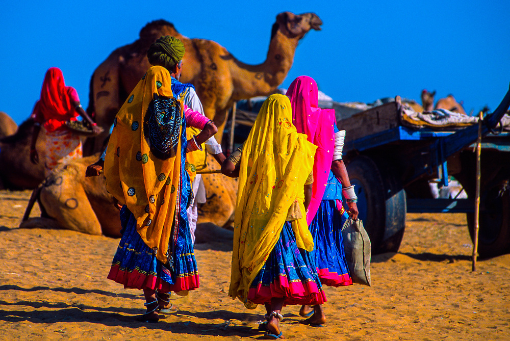 Rajasthani women in colorful saris at the Pushkar Fair (camel fair), Pushkar, Rajasthan, India