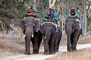 Mahoots riding domesticated Indian elephants in Pench National Park, Madhya Pradesh, India.