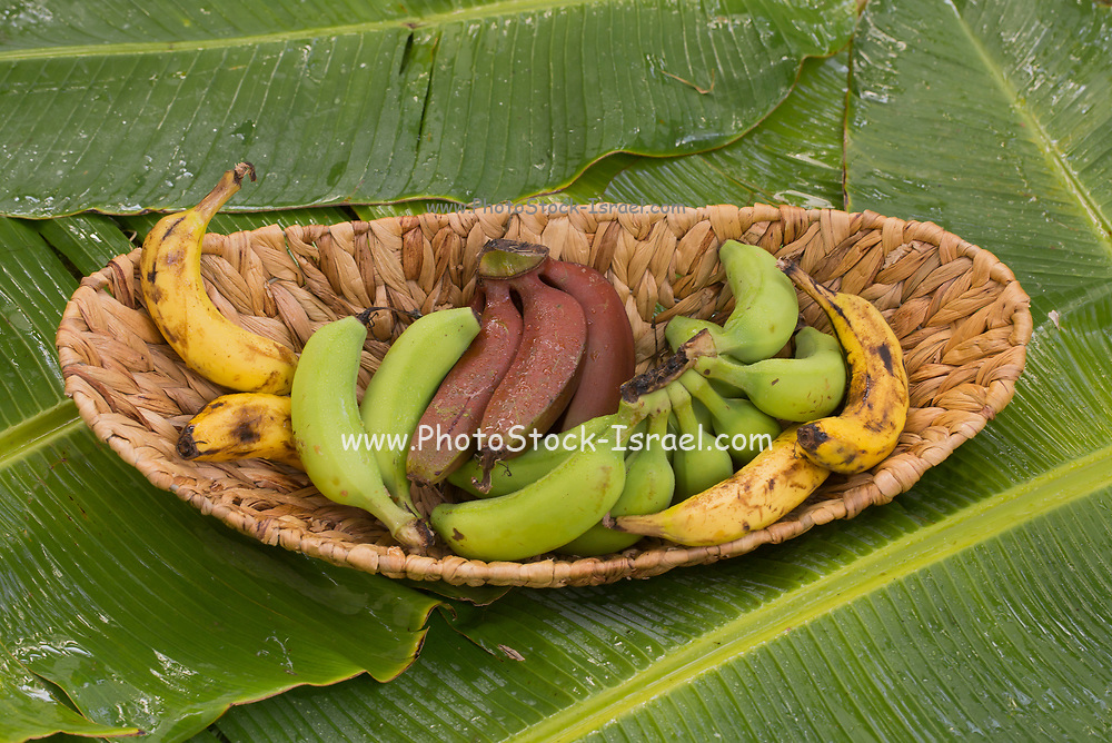 Bananas variety on a banana leaf. Three different cultivations of a banana (Musa accuminata) in a reed basket