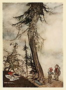 The fir tree and the Bramble from the book ' Aesop's fables ' Published in 1912 in London by Heinemann and in  New York by Page Doubleday Illustrated by Arthur Rackham,