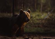 Nature & Animals