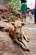 A dog lies in a street in Kibera slum, Kenya