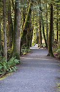 Sunlight shines through the forest along the Ravine Trail at Campbell Valley Park in Langley, British Columbia, Canada.