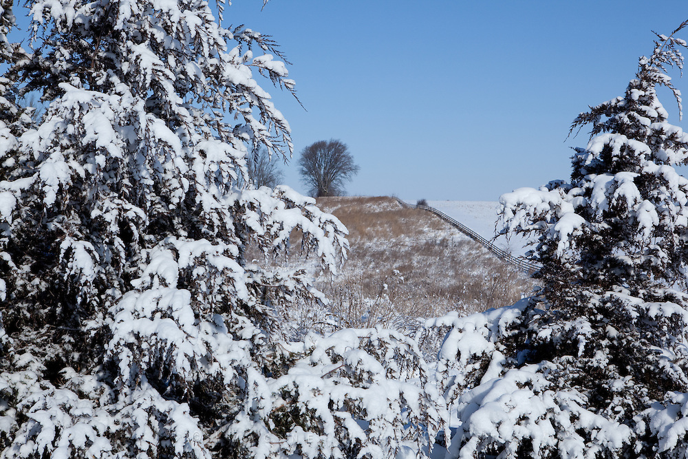 Snow weighs heavily on trees the morning after an early season snowfall.