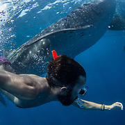 Tourist and guide snorkelling with whale shark (Rhincodon typus) by the tour banca boat, Honda Bay, Palawan, the Philppines.
