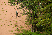 Woman seen from above walk on a field in Teli village. The Dogon Country is the most visited part of Mali with tourists visiting its tipical  villages that can be located on the cliff, on the sandy plain or in the rocky plateau