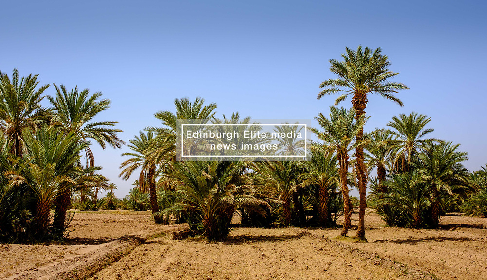 Palm trees growing near the Kasbah Ramala, southern Morocco<br /> <br /> (c) Andrew Wilson | Edinburgh Elite media