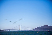 Bruine pelikanen vliegen over de baai van San Francisco. Tussen het Schiereiland van San Francisco en Marin County ten noorden van de metropool San Francisco ligt de Golden Gate Brug over de zeestraat Golden Gate, tussen de San Fransisco Bay en de Stille Oceaan. De brug is een van de zeven moderne wereldwonderen en is op 27 mei 1937 geopend. De tolbrug is een van de meest herkenbare symbolen van San Francisco en Californie.<br /> <br /> Brown pelicans fly at the San Francisco Bay. Between the San Francisco Peninsula and Marin County north of the metropolis of San Francisco's lays Golden Gate Bridge on the Golden Gate strait, between San Francisco Bay and the Pacific Ocean. Lies The bridge is one of the seven modern wonders of the world and was opened on May 27, 1937. The toll bridge is one of the most recognizable symbols of San Francisco and California.