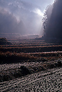 Sunlight shines down through fog onto a farm in Japan