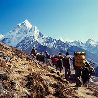 A yak train carries gear for trekkers in the Khumbu region of Nepal. 1980. Mt. Ama Dablam bkg.  (Mt. Everest Trek)