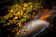Autumn leaves and stream near Rob Roy MacGregor's grave, Balquhidder, Scotland