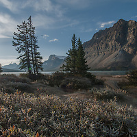 Rime ice coats the leaves of willows and other bushes growing beside Bow Lake in Banff National Park, Alberta, Canada.  Behind are (L to R) Mount Andromache, Bow Crow Peak and Crowfoot Mountain.