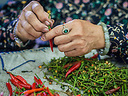 21 OCTOBER 2014 - BANGKOK, THAILAND: A vendor sorts and destems hot chilies in the Bangkok Flower Market. The Bangkok Flower Market (Pak Klong Talad) is the biggest wholesale and retail fresh flower market in Bangkok. It is also one of the largest fresh fruit and produce markets in the city. The market is located in the old part of the city, south of Wat Po (Temple of the Reclining Buddha) and the Grand Palace.    PHOTO BY JACK KURTZ