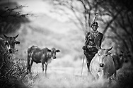 Long'erua Letorre, Warrior with Camels and Cattle. Ndera Village, MR#30