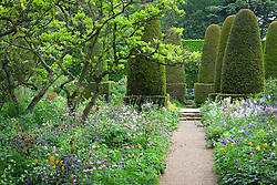 Borders filled with aquilegias in the Pillar Garden at Hidcote Manor. Yew topiary