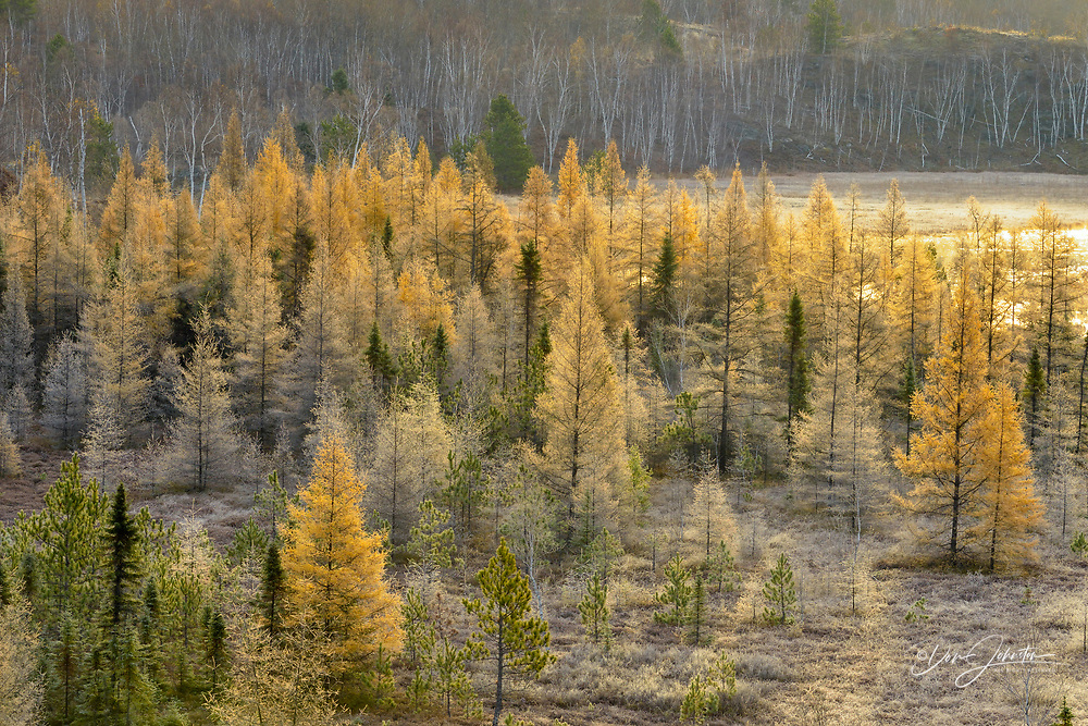 Frosted autumn larches and pines in a valley, Greater Sudbury, Ontario, Canada