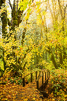 Tokatee Falls Trail. North Umpqua River. Cascade Mountains, Oregon.