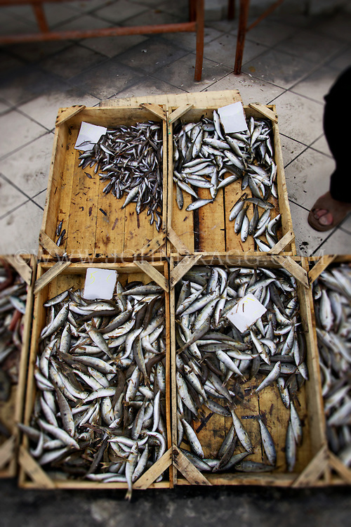 Small Atherina fish for sale at a market in Santorini, Greece