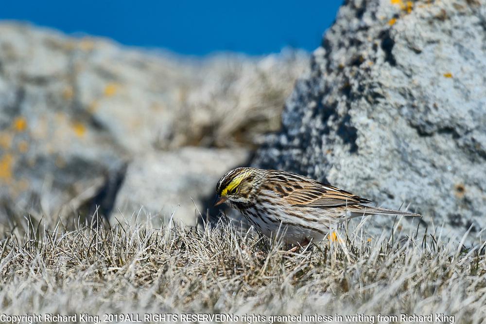 Bird photography from Elliston NL Canada