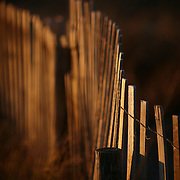 A wooden fence protects sand dunes from pedestrians and erosion on Wrightsville Beach, NC, glows in the evening light.