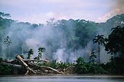 Rain Forest Burning<br />Napo River, Amazon Rain Forest, ECUADOR<br />SOUTH AMERICA
