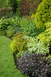 Foliage in a spring border at Eastgrove Cottage including Salvia officinalis 'Purpurascens', Astrantia 'Sunningdale Variegated' Acer dissectum and Smilacina racemosa