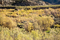 Sagebrush and willow display autumn color along Douglas Creek south of Rangely, Colorado, USA