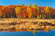 Deciduous forest in autumn colors on Anderson Lake<br />Haliburton Highlands<br />Ontario<br />Canada