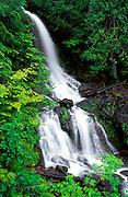 New spring growth around cascade on Falls Creek, Mount Rainier National Park, Washington.
