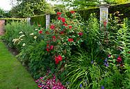 Rosa 'American Pillar and Alstromeria in a border in the Pillar Garden at Stockton Bury Gardens, Leominster, Herefordshire, UK