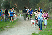 Western Australian Sleddog Sports Association held a Beginners' Day on April 19, 2015, at the Kings Meadow Polo Ground, Guildford
