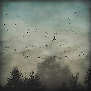 Flock of birds over misty landscape<br /> https://society6.com/product/hover-fgg_print#1=45