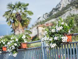 THEMENBILD - weiße Blumen in Blumentrögen vor Palmen, aufgenommen am 28. Juli 2018, Salò, Italien // white flowers in flower troughs in front of palm trees on 2018/07/28, Salò, Italy. EXPA Pictures © 2018, PhotoCredit: EXPA/ Stefanie Oberhauser