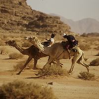 Bedouin youngsters fly across the desert in a camel race in the Wadi Rum, Jordan.