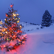 A Christmas tree on a snowy hillside decorated with brightly-colored lights. Montana