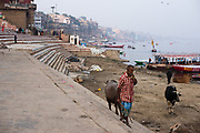 A shepherd walks over the rivers quay along the Ganges river, Varanasi.