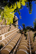 Tree ferns, palm trees and high-rise buildings. Waikiki, Hawii