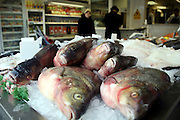 Carp fish for sale in a Stamford Hill Jewish run fishmongers.  Fish is traditionally bought on a Friday and eaten as part of the evening meal for the Sabbath.