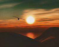Seagulls at sunset on the beach. What could be more atmospheric and bring the sea into your home than this coastal scene. This painting easily brings the atmosphere of the sea to your home. This coastal scene can be printed in different sizes and on different materials. Both on canvas, wood, metal or framed so it certainly fits into your interior. –<br /> -<br /> BUY THIS PRINT AT<br /> <br /> FINE ART AMERICA / PIXELS<br /> ENGLISH<br /> https://janke.pixels.com/featured/seagulls-at-sunset-7-jan-keteleer.html<br /> <br /> <br /> WADM / OH MY PRINTS<br /> DUTCH / FRENCH / GERMAN<br /> https://www.werkaandemuur.nl/nl/shopwerk/Zeemeeuw-bij-zonsondergang-kust/778288/132?mediumId=15&size=70x55<br /> –<br /> -