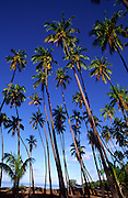 Coconut Grove, Molokai, Hawaii<br />