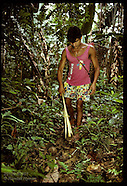 09: AMAZON BRAZIL NUT HARVEST