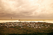 Image of seagulls on the beach at Seal Rock, Oregon, Pacific Northwest (toned black & white conversion) by Andrea Wells