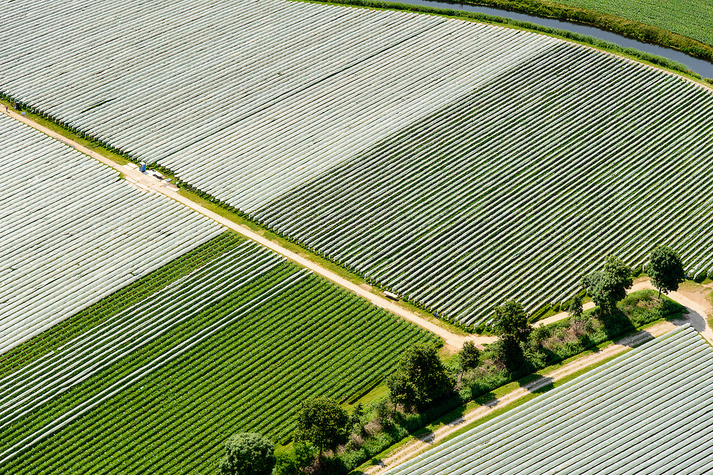 Nederland, Noord-Brabant, Gemeente Heeswijk-Dinther, 26-06-2014;  <br /> Akkers met asperges onder landbouwplastic.<br /> Fields of asparagus under plastic cover<br /> luchtfoto (toeslag op standaard tarieven);<br /> aerial photo (additional fee required);<br /> copyright foto/photo Siebe Swart.