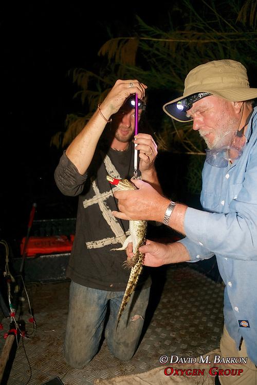 Richard & Kevin Weighing Crocodile
