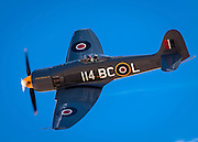 """Hawker Sea Fury """"Argonaut"""", flown by Korey Wells of Ione, California in the Unlimited Category, Silver Race, Sunday at Reno."""