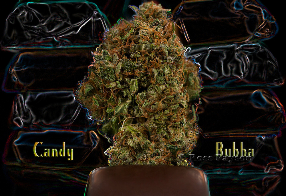 Candy Bubba nug, photographed in a professional studio