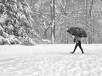 Protected from snow and rogue photographers during a storm in Central Park, New York City.